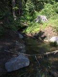 Tahoe绿色 免版税图库摄影