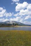 tahoe лужка озера Стоковые Фотографии RF