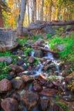 Tahoe las państwowy w spadku Obrazy Royalty Free