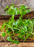 Tahoon Cress Royalty Free Stock Photography