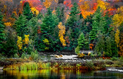 TAHQUAMENON在秋天下跌国家公园 库存照片