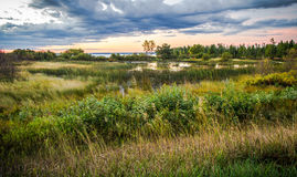 Tahquamenon River Wetlands Habitat. Wetlands along the Tahquamenon River with Lake Superior at the horizon. Tahquamenon Falls State Park. Paradise, Michigan stock image