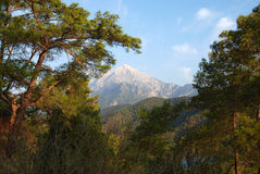 Tahtali mount. And pine in Turkey Stock Image
