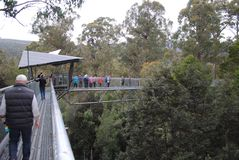 Tahune air walk in Tasmania. Popular tourist attraction,  in tree canopy Royalty Free Stock Images