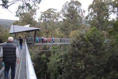 Tahune luft går i Tasmanien Royaltyfria Bilder