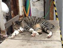 Tai Ο γάτα Στοκ Εικόνες