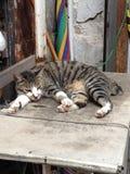 Tai Ο γάτα Στοκ φωτογραφίες με δικαίωμα ελεύθερης χρήσης