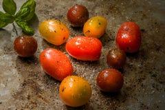 Tai-färgade tomater på bakplåten Arkivfoto