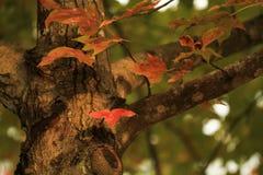 季节的秋天在Tai钳子hk 库存照片