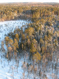 Taig aéreo Fotografia de Stock Royalty Free