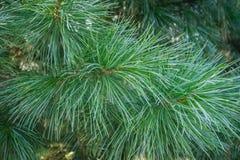 Taiga, κωνοφόρο δάσος στοκ εικόνες με δικαίωμα ελεύθερης χρήσης