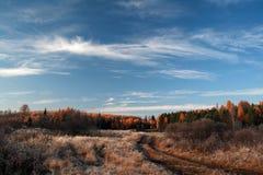 Taiga στην περιοχή του Ιρκούτσκ, της Ρωσίας Στοκ Φωτογραφία