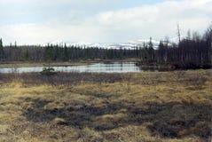 taiga χερσονήσων κόλα Στοκ Εικόνα