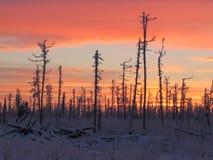taiga восхода солнца стоковое фото