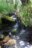 taiga потока стоковая фотография rf