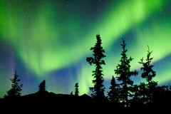 Северное сияние северного сияния спруса taiga Юкона Стоковая Фотография