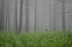 taiga Image libre de droits