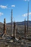 Taiga after acid rains Stock Image