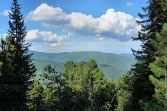 Taiga alpino pitoresco do cedro Imagem de Stock Royalty Free