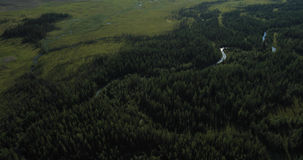Taiga. Altai, Siberia. Taiga - band harsh coniferous forest composed of species of tall spruce, pine, larch, cedar and fir, with an admixture of birch, aspen stock video