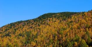 Taiga. Autumn. Royalty Free Stock Photo