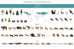 Free Taiga Biome, Boreal Snow Forest. Terrestrial Ecosystem World Map. Animals, Birds, Fish And Plants Infographic Design Royalty Free Stock Images - 140114209