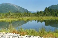 Taiga cerca del Baikal Fotos de archivo