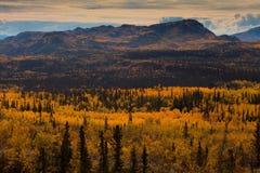 Taiga dans l'automne photographie stock libre de droits