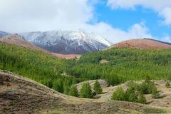 Taiga de Sibérien de montagne photo libre de droits