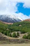 Taiga del siberiano della montagna fotografia stock libera da diritti