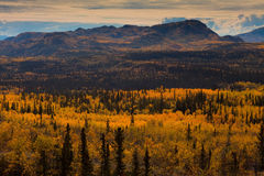 Taiga in Fall Royalty Free Stock Photography
