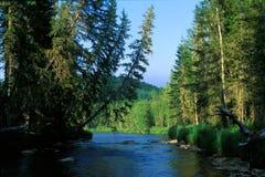 Taiga flod fotografering för bildbyråer