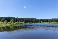 Taiga forest on the edge of the lake Stock Photography