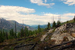 Taiga after a forest fire on the mountain pass. Stock Photos