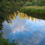 Taiga forest mirrored on Yukon mashland pond Stock Photo