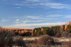 Taiga in the Irkutsk region Royalty Free Stock Photos