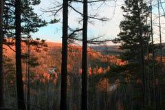 Taiga in the Irkutsk region Royalty Free Stock Image