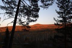 Taiga in the Irkutsk region, Russia Stock Images