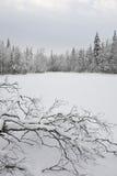 Taiga lake Royalty Free Stock Photos