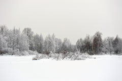 Taiga lake Stock Image