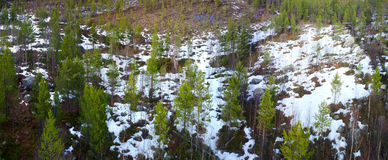 Taiga Lapland with the bird's eye view, panorama Stock Photography