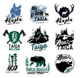 Taiga logo sign. Forest logotype. Bear taiga emblems. Vintage Camping logo. Stock Photo