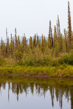 Taiga at McQuesten River near town of Mayo Canada Royalty Free Stock Photo