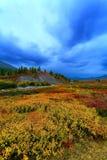 Taiga meadow Stock Photo