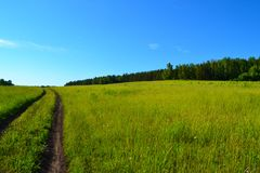 Taiga meadows. Of Krasnoyarsk region. Rich in herbs and flowers royalty free stock images