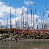Taiga quemado en el territorio de Yukon central de la batería de río Fotos de archivo libres de regalías