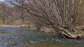 Taiga river in the spring stock footage