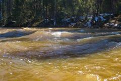 Taiga river in the spring flood flows through the forest. The restless taiga river flows through the dense forest in the spring flood stock image