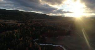 Taiga sibérien de cèdre au coucher du soleil, Altai, Russie clips vidéos