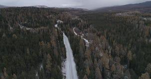 Taiga sibérien de cèdre aux hivers de coucher du soleil, Altai, Russie 2 banque de vidéos